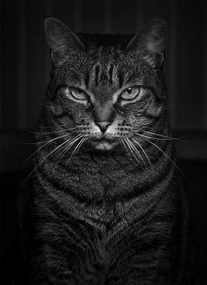 Katzen Portrait auf dem Tisch