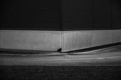 hinter der Ecke sitzt die schwarze Katze